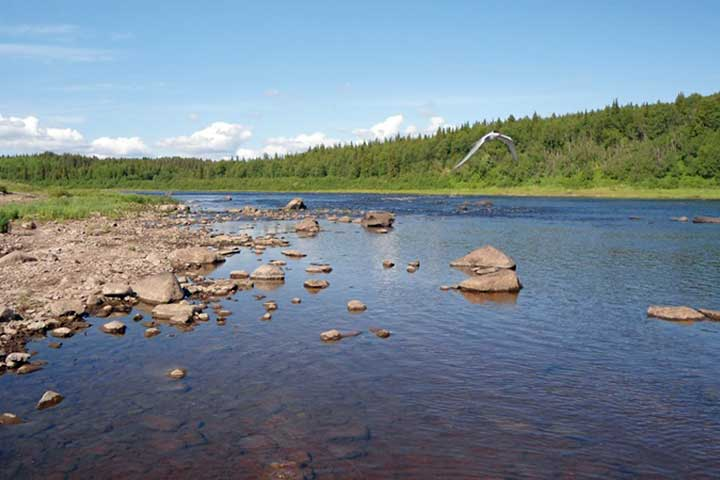 kola peninsula fly-fishing atlantic salmon angling fishing umba varzuga river